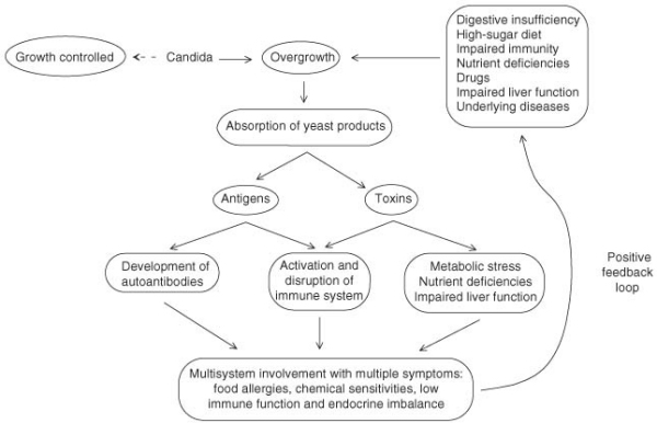 anti-candida diet - the candida cycle picture
